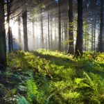 The Woody Biomass Hoax