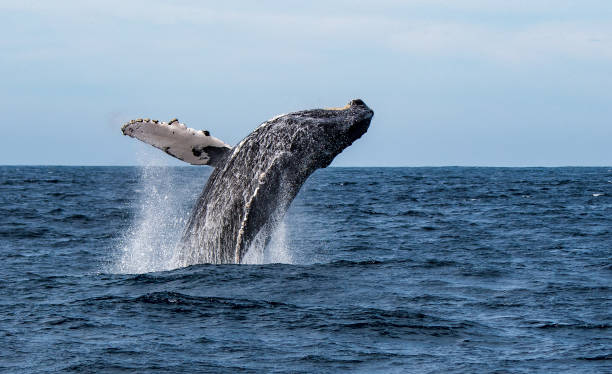 Get Right with Whales